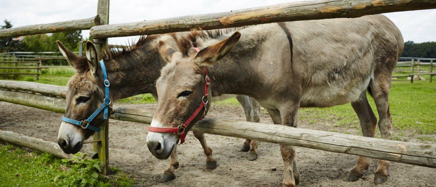 Hof Constien - Esel und andere Tiere