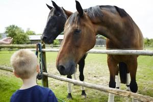 Hof Constien - Pferde
